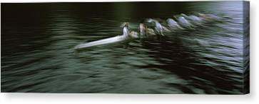 Crew Racing, Seattle, Washington State Canvas Print by Panoramic Images