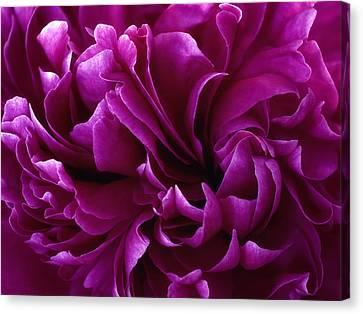 Crimson Chiffon Canvas Print by Darlene Kwiatkowski