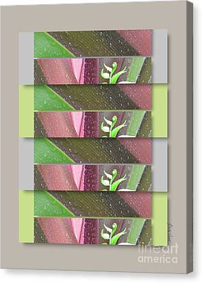 Canvas Print featuring the photograph Crinum Lily Collage3 by Darla Wood