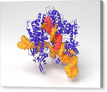 Crispr-cas9 Gene Editing Complex Canvas Print by Indigo Molecular Images