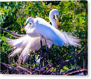 Criss-cross Egrets Canvas Print by Susan Molnar