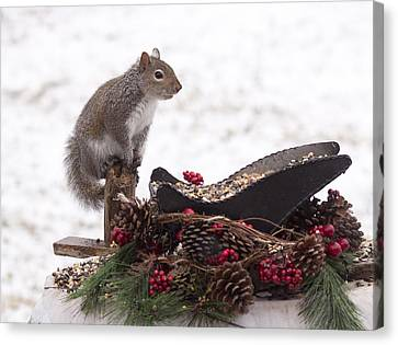 Critter Christmas Canvas Print by Marty Maynard