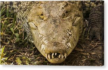 Crocodile Canvas Print by Aged Pixel