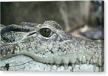 Canvas Print featuring the photograph Crocodile Animal Eye Alligator Reptile Hunter by Paul Fearn