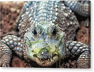 Crocodile Close-up Canvas Print by Goyo Ambrosio