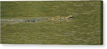 Verde River Canvas Print - Crocodile In A River, Palo Verde by Panoramic Images