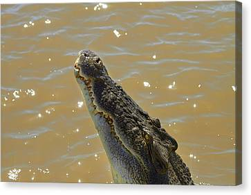 Crocodile Jumping Out Of The Water Canvas Print by David Wall