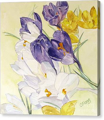 Canvas Print featuring the painting Crocus by Carol Flagg