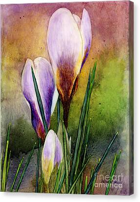 Crocus Flowers Canvas Print - Crocus by Hailey E Herrera