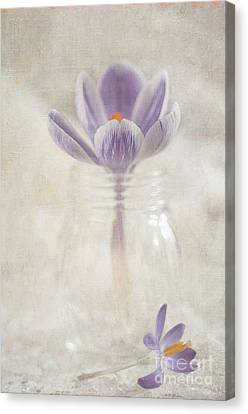 Crocus Canvas Print by Marion Galt