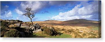 Crooked Tree At Feather Tor, Staple Canvas Print by Panoramic Images