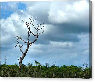 Crooked Tree On Crooked Island Canvas Print by Julie Dant