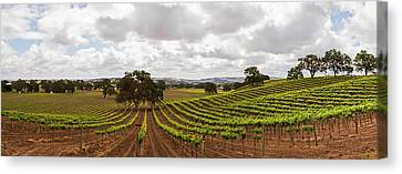 Crops In A Vineyard, San Luis Obispo Canvas Print by Panoramic Images