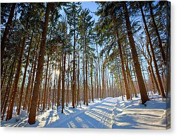 Cross-country Ski Trail In A Spruce Canvas Print by Jerry and Marcy Monkman