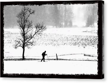 Cross Country Skiier Canaan Valley Canvas Print by Dan Friend