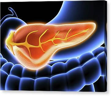 Cross Section Of Pancreas Canvas Print