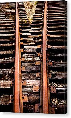 Crossing Tracks Canvas Print by Karol Livote