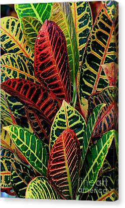Canvas Print featuring the photograph Croton Leafscape by Larry Nieland