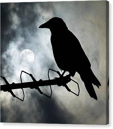 Crow Against A Moonlit Sky Canvas Print