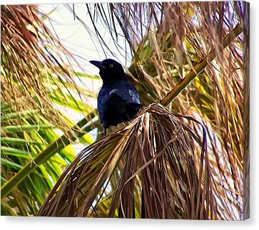 Crow In A Palm Tree Canvas Print
