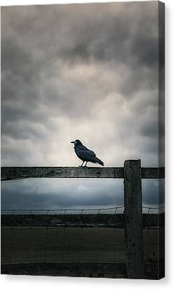 Crow Canvas Print by Joana Kruse