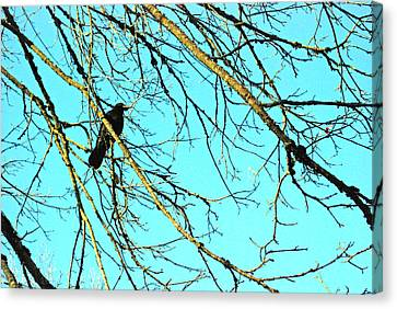 Canvas Print featuring the photograph Crow by Kjirsten Collier