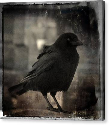 Crow Portrait Canvas Print