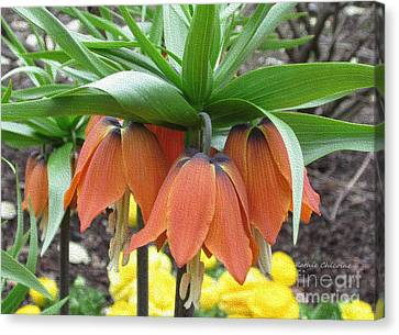 Crown Imperial Fritillaria Canvas Print by Kathie Chicoine