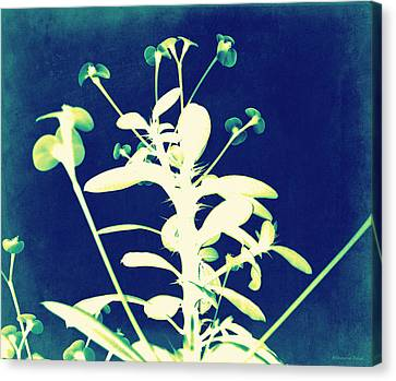 Crown Of Thorns - Blue Canvas Print by Shawna Rowe