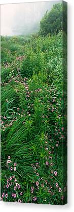 Crown Vetch Flowers, Herrington Manor Canvas Print by Panoramic Images