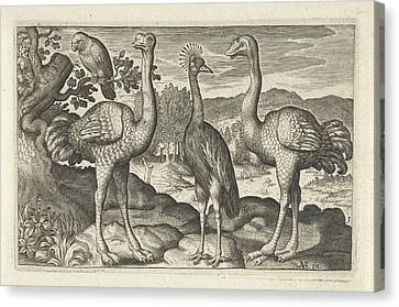 Crowned Crane Between Two Ostriches, Anonymous Canvas Print by Artokoloro