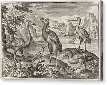 Crowned Crane Between Two Ostriches, Nicolaes De Bruyn Canvas Print by Nicolaes De Bruyn