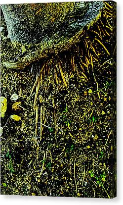 Crowned Roots With A Perspective Canvas Print by Sandra Pena de Ortiz