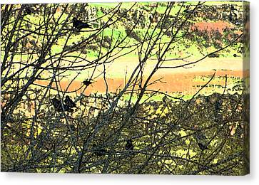 Crows And Two Blackbirds					 Canvas Print