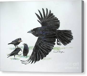 Crows Canvas Print by Carol Veiga