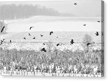 Crows In Cornfield Winter Canvas Print by Dan Friend