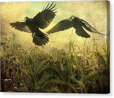 Crows Of The Corn 2 Canvas Print