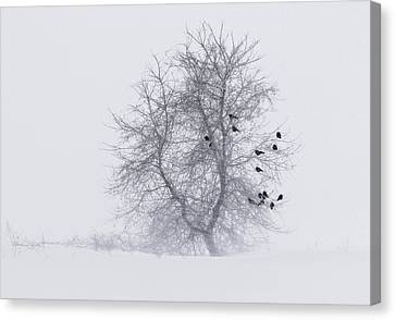 Crows On Tree In Winter Snow Storm Canvas Print by Peter v Quenter