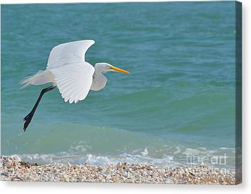 Cruising The Shore Canvas Print