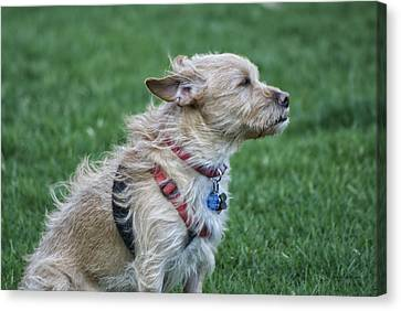 Canvas Print featuring the photograph Cruz Enjoying A Warm Gentle Breeze by Thomas Woolworth