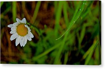 Crying For Love  Canvas Print by Tim Rice
