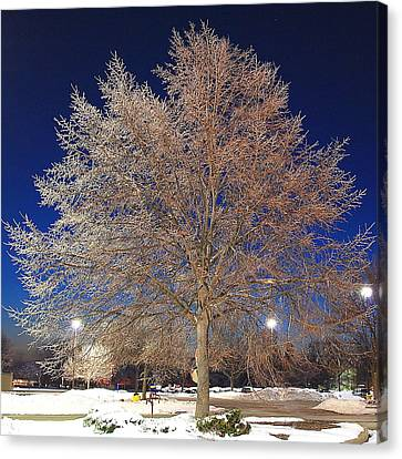 Crystal Tree Canvas Print by Frozen in Time Fine Art Photography