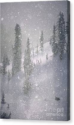 Crystalized Snowflakes Falling While Being Backlit By The Sun Canvas Print