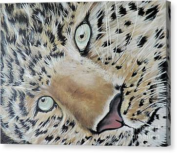 cub Canvas Print by Dianna Lewis