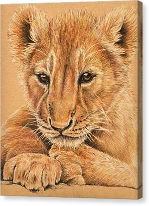 Canvas Print featuring the drawing cub by Heidi Kriel