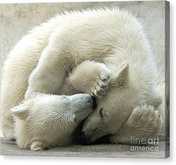 Cub Love Canvas Print