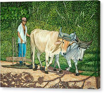 Cuban Countryman Canvas Print by Manuel Lopez