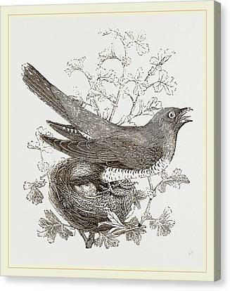 Cuckoo And Nest Canvas Print by Litz Collection