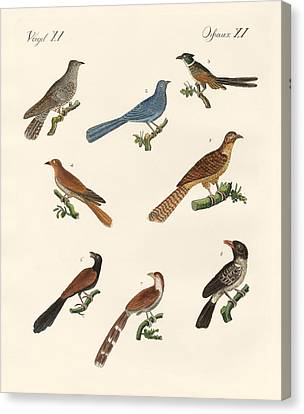 Cuckoos From Various Countries Canvas Print by Splendid Art Prints