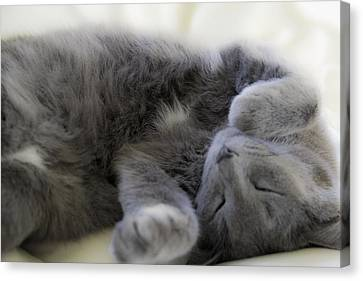 Cuddley Cat Canvas Print